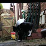 猫のひみつ (BBC放送)
